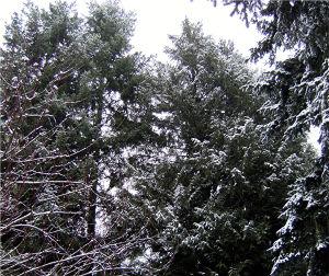 Snow again jan 25 09