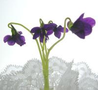 Fiveviolets
