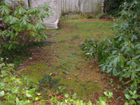 Yard_debris